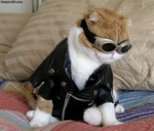 Aviator Halloween cat costume