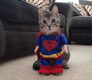 Supercat cat Halloween costume