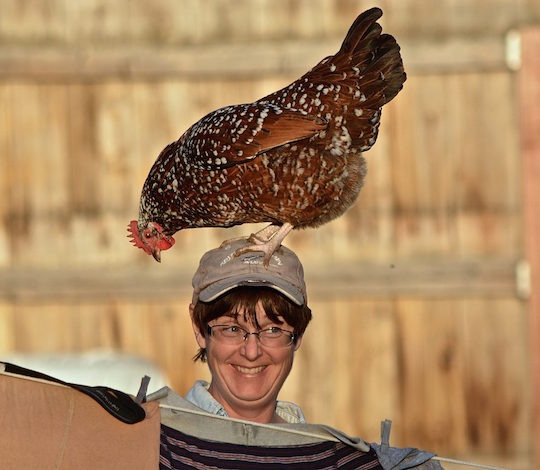 woman with chicken on her head