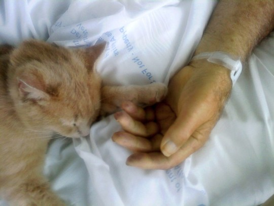 cat comforts dying veteran
