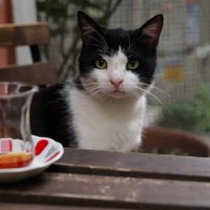 Kedi cats of Istanbul