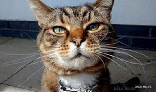 Brutus the cat