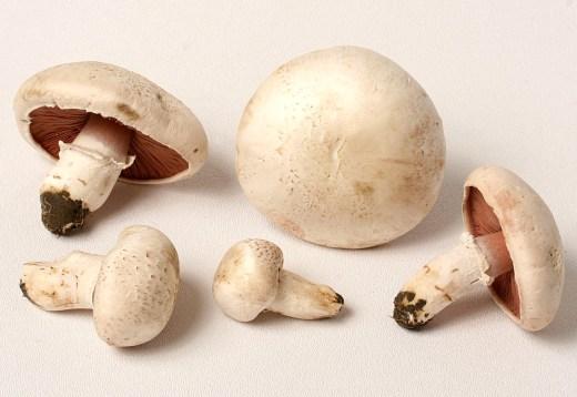 Image result for agaricus mushroom