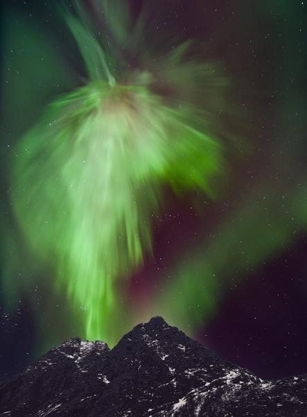 où voir des aurores boreales animal - loup