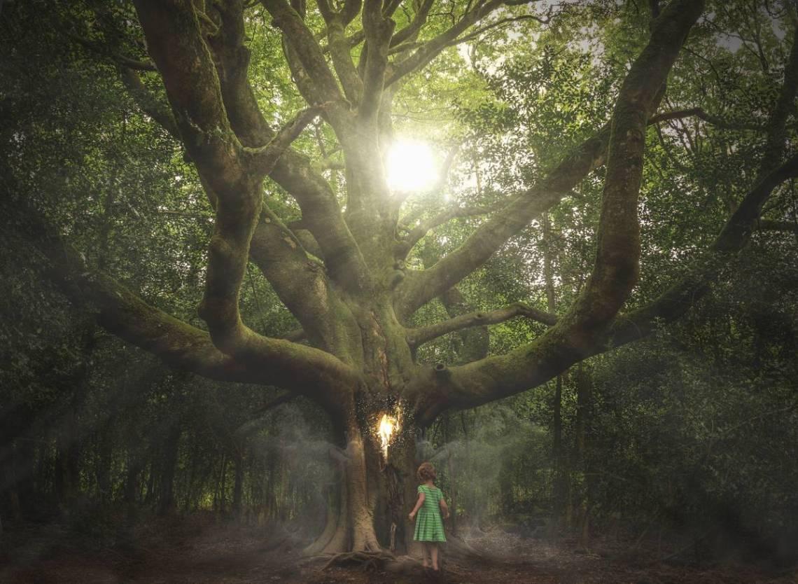 forêt brocéliande Bretagne