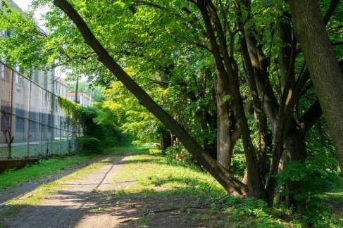 Lost Wisteria Walk near Barringer High School