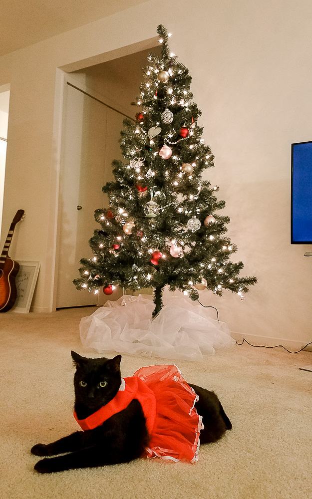 Shadow at Christmas and Christmas Movies
