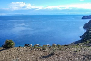 isla walk sheeps