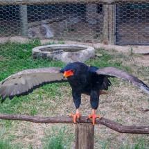 eagle power 1