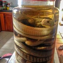 snake rice wine_