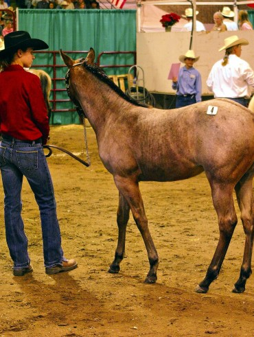 Montana horse auction