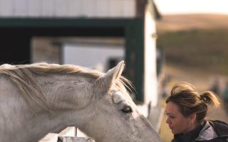 What does it mean to vet a horse?