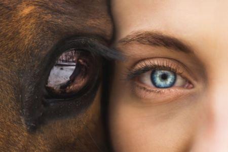horse and human eyes