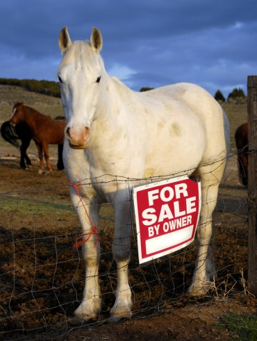 Buying a horse from a private seller