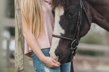 What is a horse passport and what to do if you think yours is fake