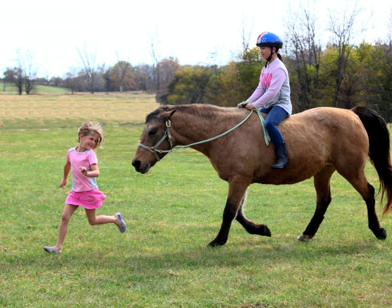 How to buy a horse for your children