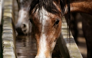 Make sure your horse stays hydrated in warm and humid weather