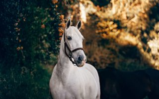 Buying a horse that is right for you