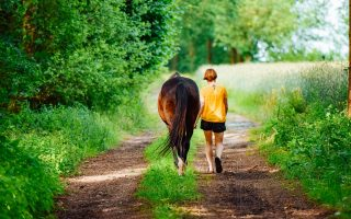 How to buy a family horse that the whole family will love