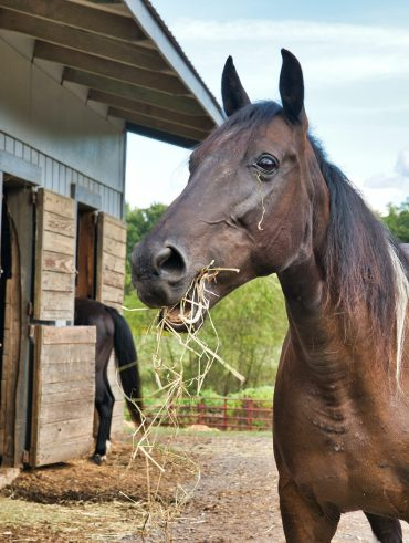 How to find the right stable for your horse