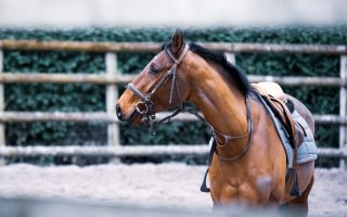 Are you listening to what your horse is telling you?