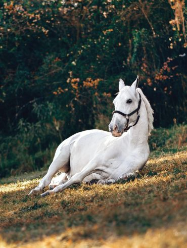 How to photograph a horse for selling