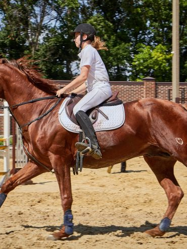 Prepare your horse for a quick sale by making him used to different riders