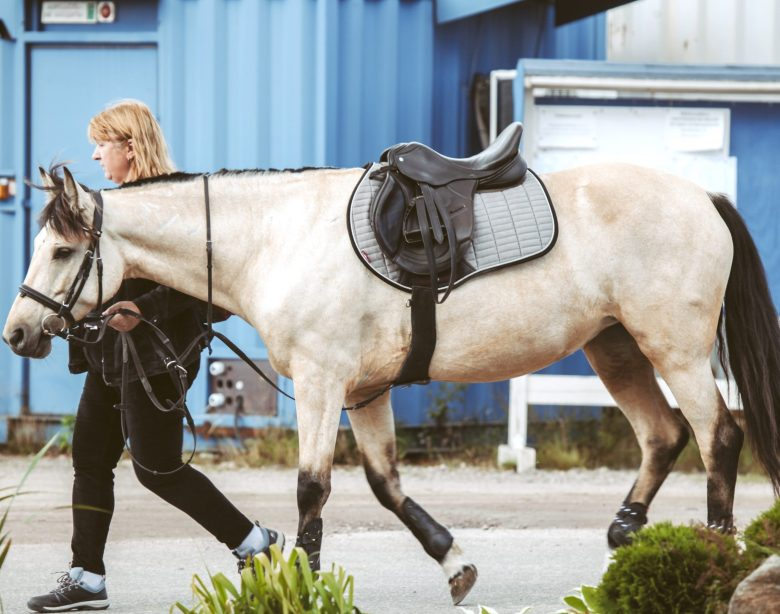 tacked up horse being led across the yard by a handler