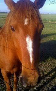 Pferd auf Farm