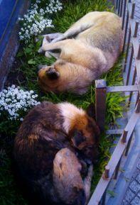 Hunde in Tucuman