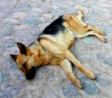 Hund in Purmamarca