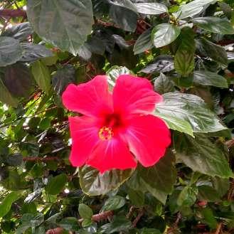 Blütenpracht an der Straße