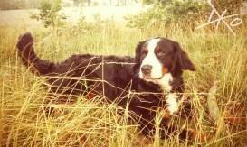 Charmanter Hund (bei Schönefeld)