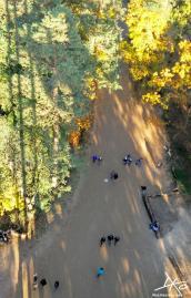 Ein Blick von 20 Meter hohen Baumkronenpfad nach unten