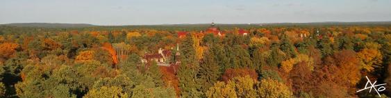 Das Panoramabild zeigt die bereits herbstlichen Baumkronen des Waldes der Beelitz-Heilstätten