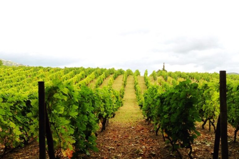vineyards for Port in the Duoro Valley Portugal