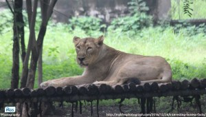 The Lion and Lioness Images