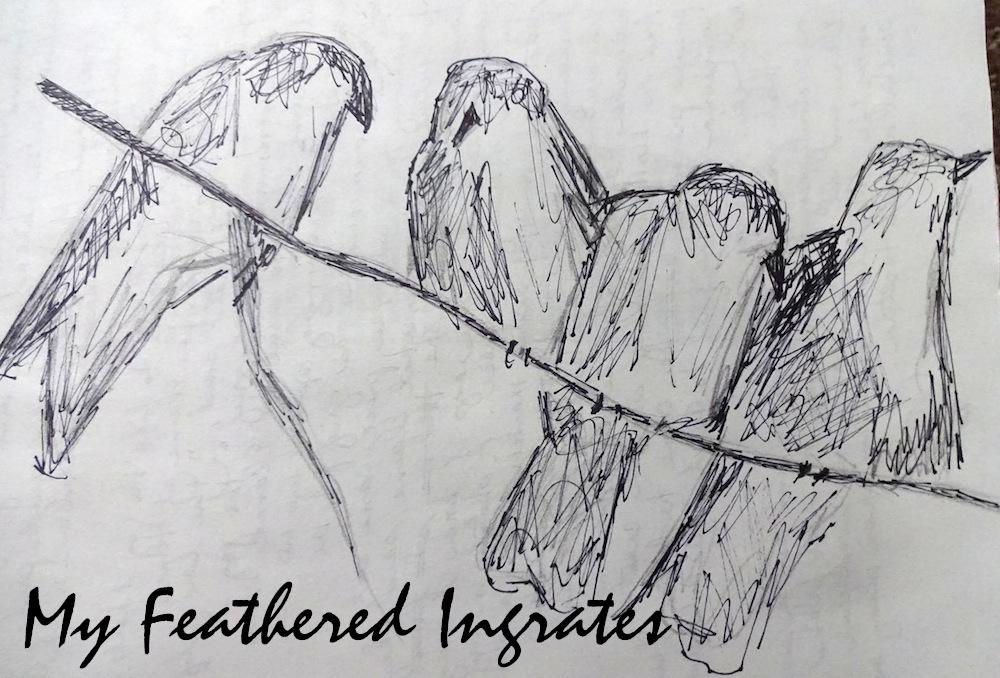 pen sketch of four crows on a limb by carol a. watson