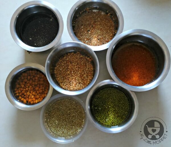 Sprouting grains and beans for sathumaavu powder for babies