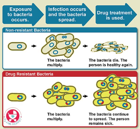 skip the antibiotics