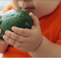 Can I give my Baby Avocado?