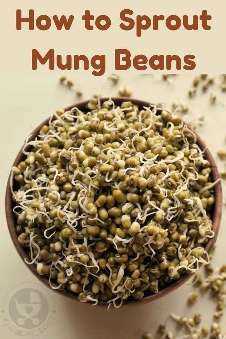 Sprouting beans makes them more bio-available - which means they are better absorbed by the body. Try making your own sprouts at home with this easy recipe!