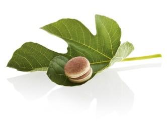 Actu sucrée : le macaron du mois de Pierre Marcolini est à la figue