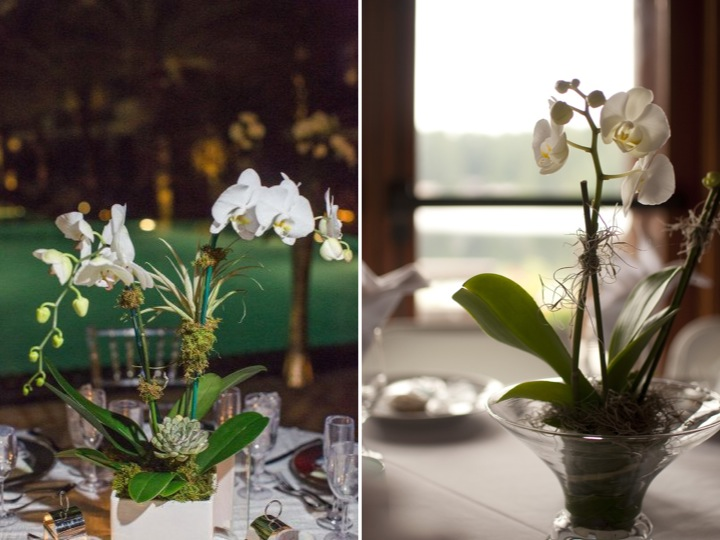 Floral inspiration – Beautiful Orchids ♥