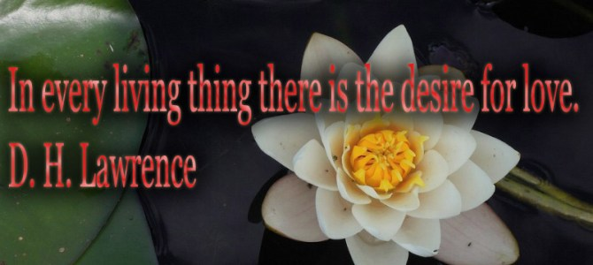 There is the desire for love in anything that lives