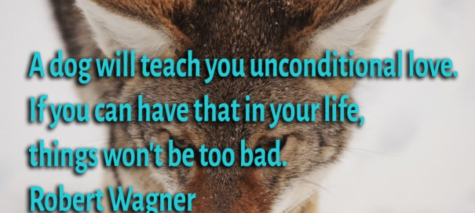 A dog will teach you unconditional love. If you can have that in your life