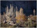Poplars growing in the valley below Sar Agha Seyed village, Iran.
