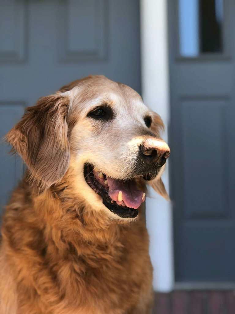 saying goodbye to my dog