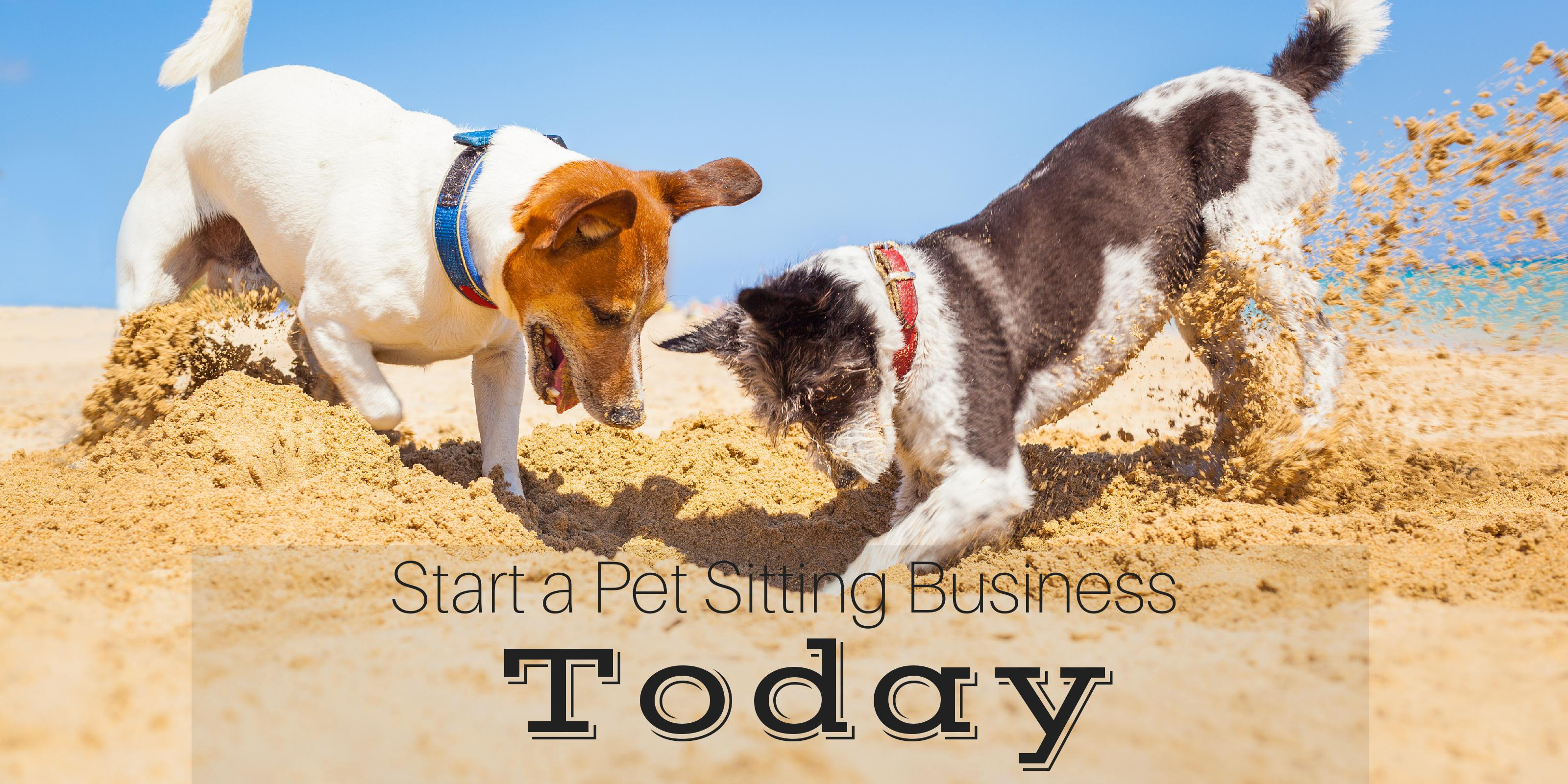 start a petting sitting business