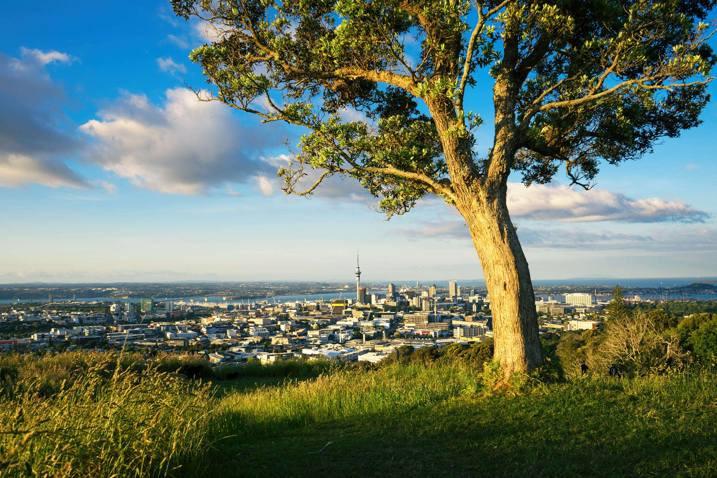 Auckland Sunset From Mount Eden